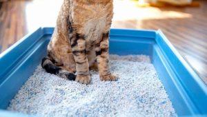 kedi kumu, kedi kumu seçimi, kedi kumu özellikleri