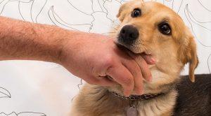 köpek ısırması